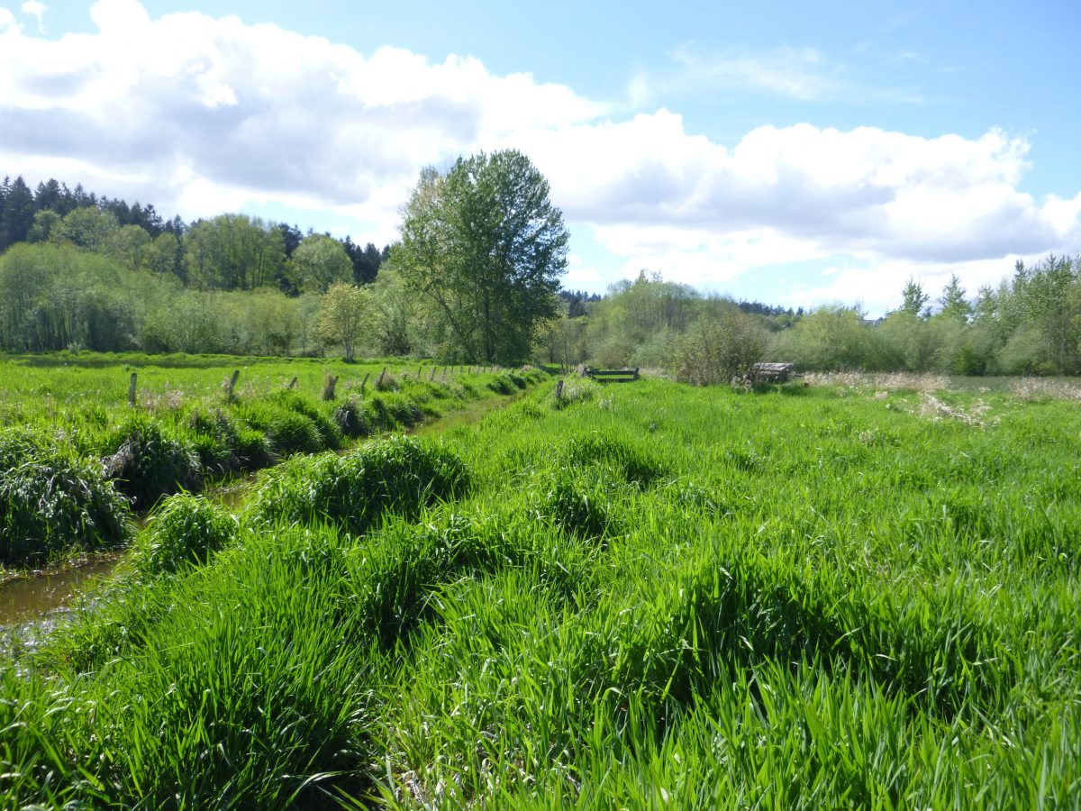 Report from the Farm Forum: Water Rights and Irrigation