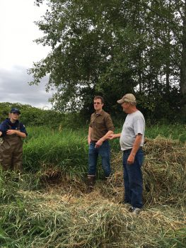 Loren Paschich standing near one pile of removed reed canarygrass