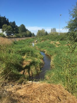 Cleared out Clear Creek, after WCC work. Picture taken from the culvert above 52nd, looking northwest on August 29th, 2016.